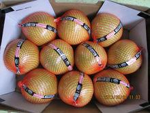 Honey Pomelo of Zhangpu Yicai fruit & vagetable co.,ltd.