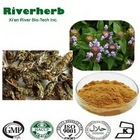 Natural Common Selfheal Spike Extract Brunellae Spica extract