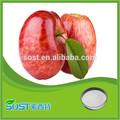 chine fournisseur de pure nature extrait de pomme