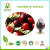 Prevent Urinary tract infection- cranberry fruit extract powder,cranberry proanthocyanidins,dried cranberry extract powder