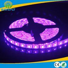 hotsale 5050 60leds/m dc12v 14.4w/m champion sales flexible led strip light CE&RoHS certificated