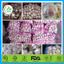 natural garlic/garlic price supplier from China
