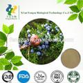 Alta qualidade natural fructus juniper berry& junípero extrato