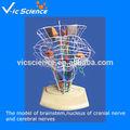umani nn modello umano modello di rete neurale