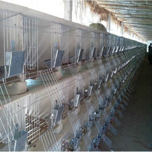 commercial rabbit farm cage with high quality and best price