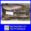 New Season Fresh Frozen Catfish
