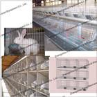 chicken farm cage/chicken rearing cage/galvanized chicken cage