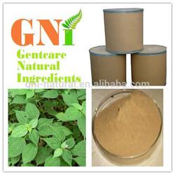 Cheap best Nettle Herb Extract 1% 2% 4:1 10:1