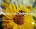 Miel cruda de los compradores/primas de miel de abeja/suministrar miel cruda de la fábrica