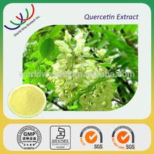 Quercerin free sample for trial HACCP KOF-K FDA hunan changsha supplier pure plant extract 95% 98% quercetin pe