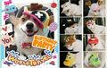 precioso perro perro sombrero casco para mascotas pet tapa y sombrero casco para el perro