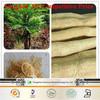 Free Sample Pasak bumi powder