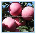 maçã fresca de frutas