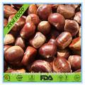 2014 nueva cosecha chino dulce fresca de la castaña precio para la exportación de la