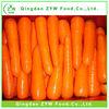 best quality fresh vegetable carrots