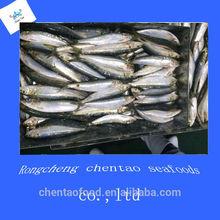 Price Sardine Fish
