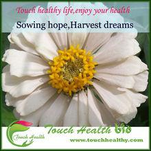 Heirloom Zinnia elegans Rocky Mountain Plains Wild Mix Flower Fresh Bulk Seeds