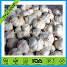Chinese Natural Fresh and Frozen white garlic / Normal white garlic /Pure White Jinxiang Garlic Specification