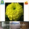 Cinese erba naturale polvere di estratto di calendula/tagetes erecta l