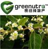 Thunder God Vine extract/Common Threewingnut Root extract