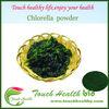 Touchhealthy supply 100% Natural chlorella / Chlorella (Broken Cell Wall) / chlorella powder