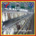 galvanized wire mesh chicken breeding (ISO9001 factory)