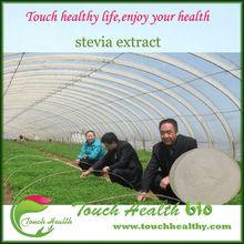 organic stevia extract sugar/100% natural sweetener/ pure stevia powder