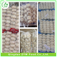 frehs natural garlic/fresh white garlic/organic garlic