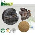100% puro fungo chaga estratto/prezzo competitivo obliquo inonotus/top qualità triterpeniche