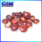 New Plastic Table Decorative Food Artificial Chestnuts for Sale Cheap