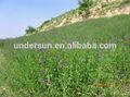 Top quality Alfalfa extract/alfalfa hay price