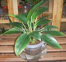 alibaba express bonsai accessories soil