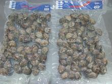 raw frozen short necked clam