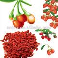 melhor venda de frutas wolfberry para venda