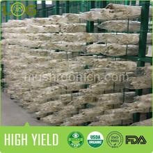 high yield hot sale china vertical mode Pleurotus eryngii grow bag