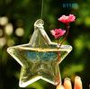 Star shaped glass Vase air plant glass vase