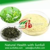 100% natural Epigallocatechin Gallate /EGCG / Green tea extract