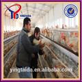 Galvanizli veya pvc kümes tavuk yapısı( ISO9001 fabrika)
