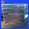cailles en cage de batterie oem pour la vente