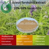 Forskohlii/coleus/20% coleus forskohlii extract/coleus forskohlii extract 10%-98% forskohlin
