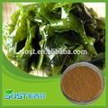 100% Natural kelp extract 95% 98% Fucoidan laminaria seaweed extract