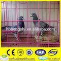 grande gaiola do papagaio