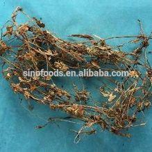 Ya Zhi Cao - COMMELINA COMMUNIS remédio herbal para gota