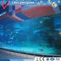 Géants. requins d'aquarium