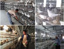 paloma de carreras de palomas de la jaula jaula de cría de la capa de recubrimiento azul jaula de paloma torcaz