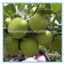 Golden Apple Bulk Fresh Green Apples