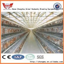 Zhongzhou professional designs chicken coop 100 chickens/automatic chicken cage design