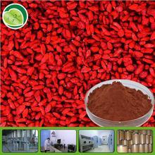 dried goji organic dried goji berry wolfberry extract with great price