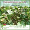 hybrid sementes de algodão para a venda com preço baixo