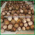 cycas revoluta bombilla de palma sago paisajismo vivero de árboles